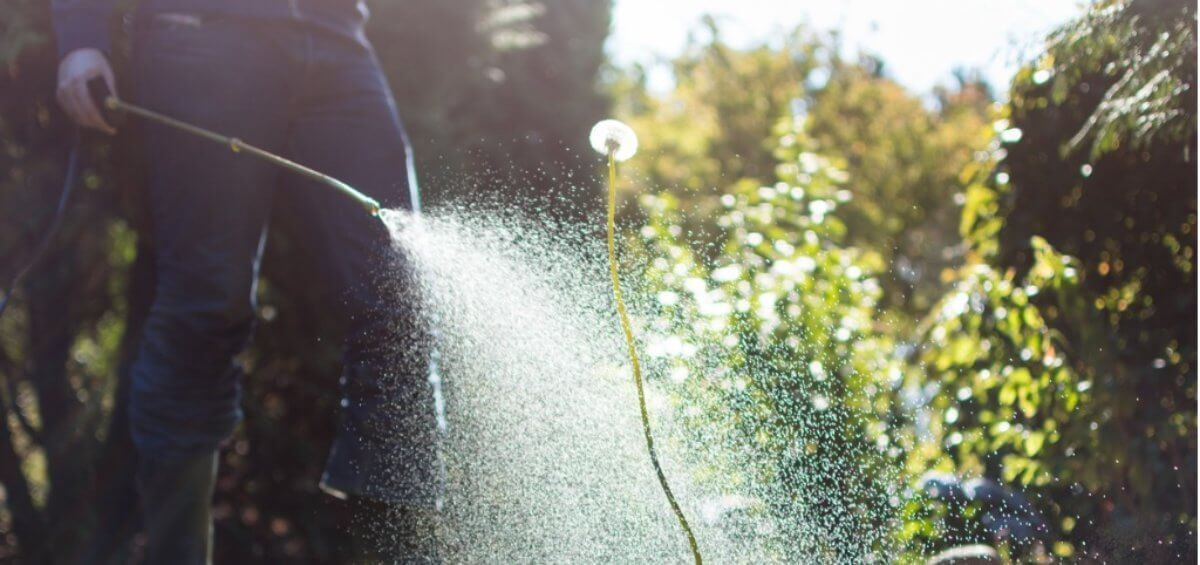 Local councils phasing out glyphosate