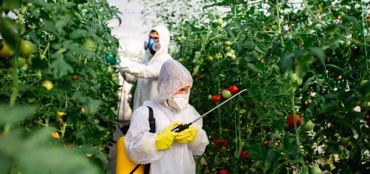 Pesticide Heart and Stroke Risk