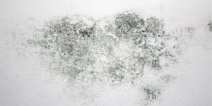 Key Factors for Successful Mould Remediation